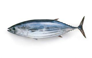 Bonito tuna - sushi delivery Nitra